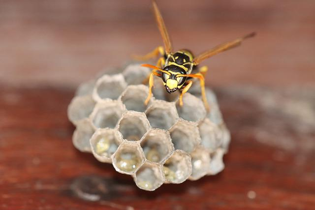 Wasp, Hornet, Insect, Bee, Animal, Nature, Close Up