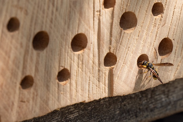 Insect Hotel, Bee Hotel, Wild Bee