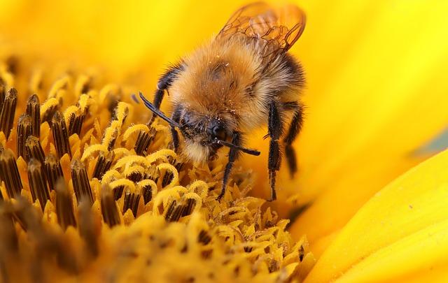 Animals, Insect, Hummel, Macro-close-up