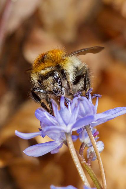Hummel, Insect, Pollen, Pollination