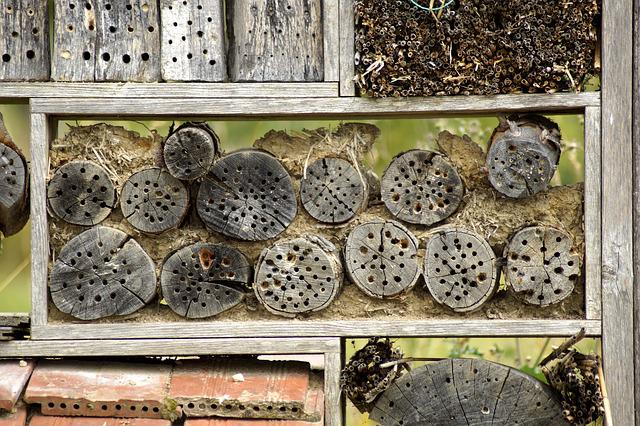 Insect Hotel, Insect House, Insect Box, Insect