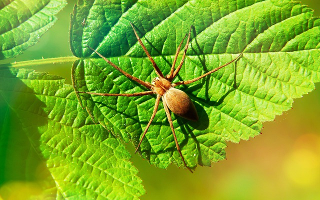 Darownik Wonderful, Arachnid, Insect, Plant, Leaf