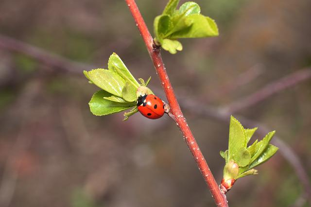 Insect, Ladybug, Plant, Leaves