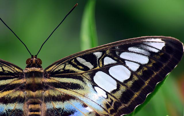 Butterfly, Insect, Lepidoptera, Wing, Colorful, Close