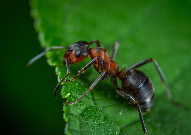 Macro, Insect, Ant