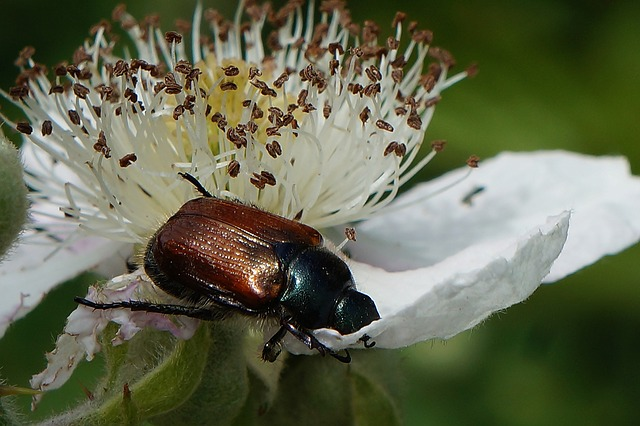 Insect, The Beetle, Macro, Plant, Closeup, Nature