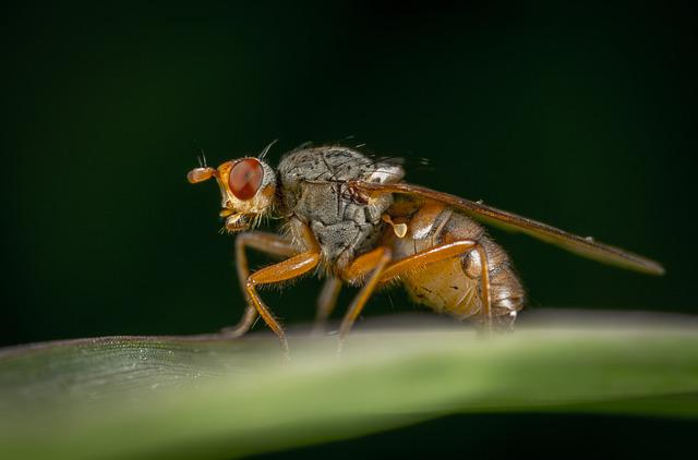 Insect, Nature, Animals, Living Nature, Fly, Macro