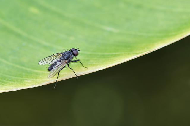 Fly, Insect, Leaf, Green, Macro, Housefly