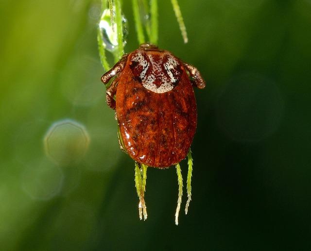 Mite, Mint, Tick, Mites, Insect