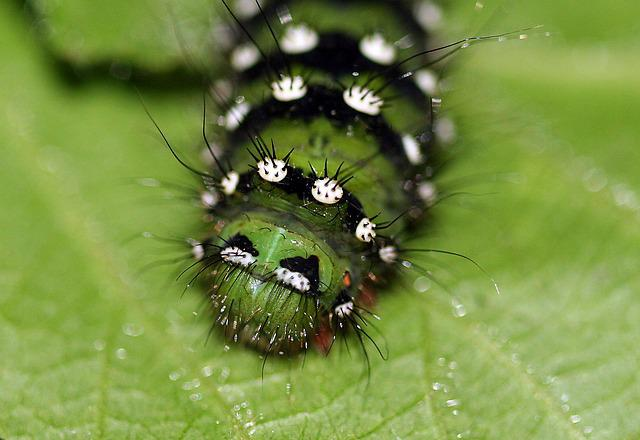Caterpillar, Larva, Insect, Green, Macro, Natural
