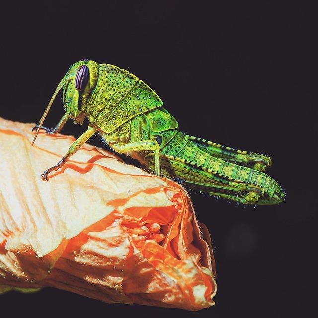 Nature, Animal, Animal World, Insect
