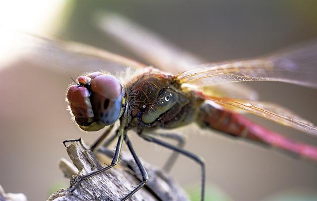 Insect, Animalia, Nature