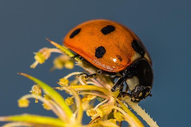 Ladybug, Flower, Insect, Blossom, Bloom, Spring, Nature