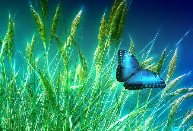 Grass, Butterfly, Meadow, Nature, Insect, Blue, Halme