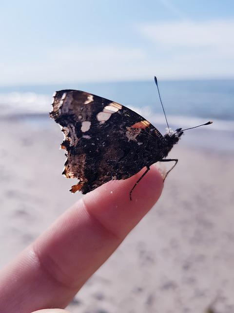 Nature, Butterfly, Insect, Summer