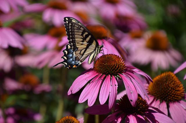 Butterfly, Nature, Flower, Insect, Summer