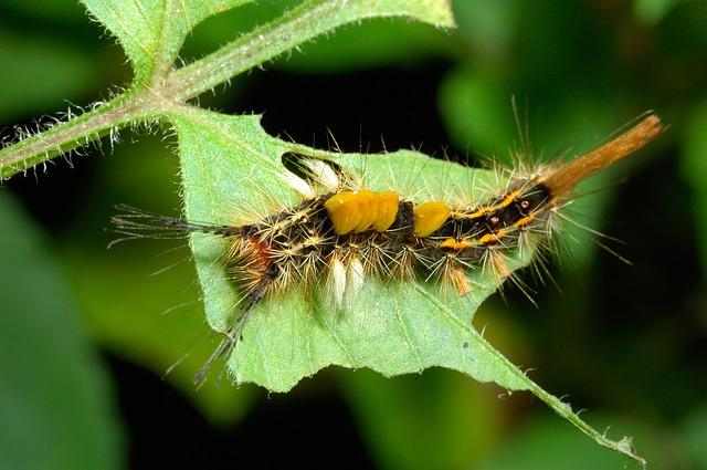 Insect, Caterpillar, Nature, Wildlife