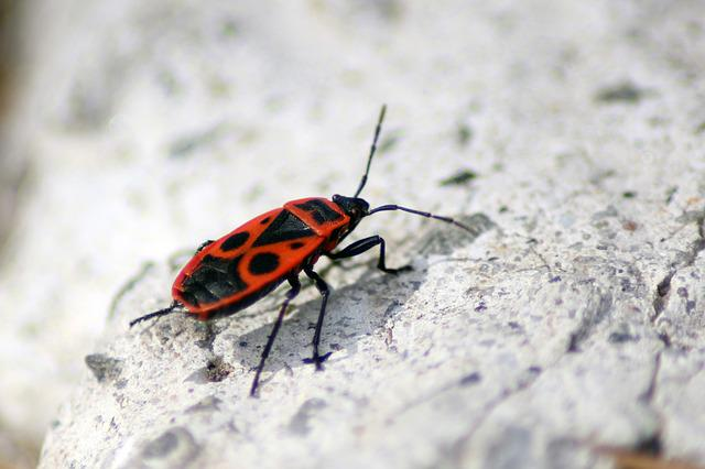 Bug, Closeup, Antenna, Insect, Nature, European