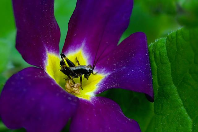 Nature, Flower, Primrose Flower, Insect, Petite, Cute