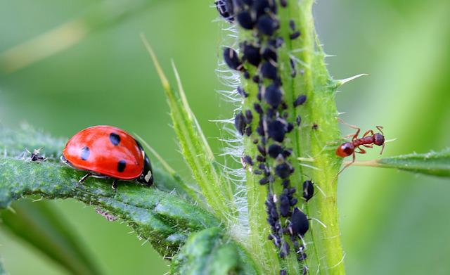 Ladybug, Beetle, Coccinellidae, Insect, Nature, Red