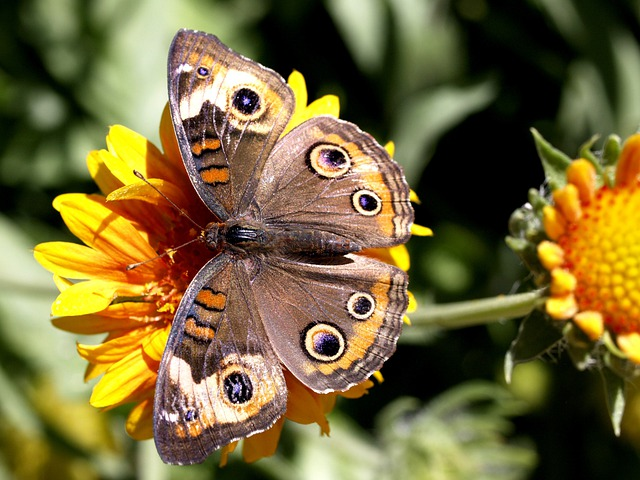 Butterfly, Insect, Animal, Nature, Flower, Yellow