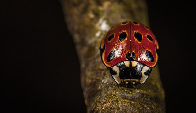 No One, One, Insect, Bespozvonochnoe, Ladybug, Macro