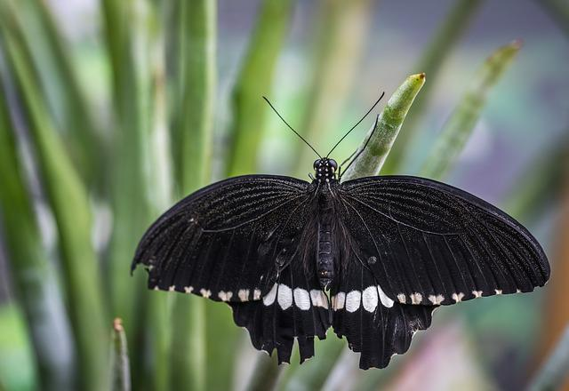 Nature, Outdoors, No One, Insect, Sheet, Butterfly
