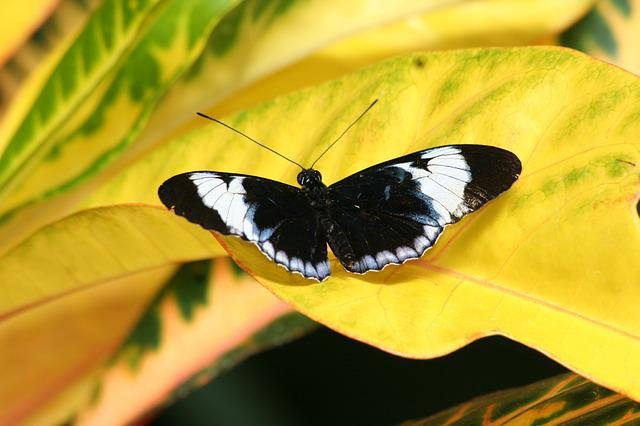 Butterfly, Insect, Nature, Summer, Outdoors