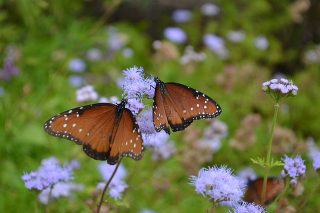 Butterfly, Insect, Nature, Outdoors, Flower