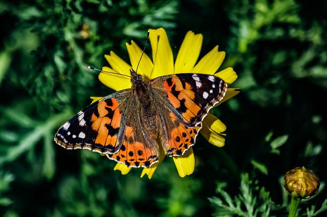 Nature, Butterfly, Insect, Outdoors, Spring, Flower