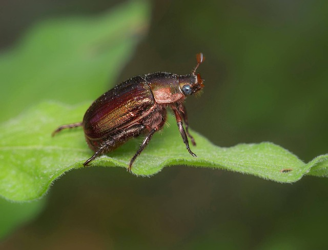 Invertebrate, Nature, Insect, Wildlife, Outdoors