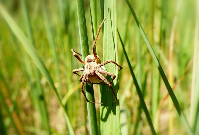 Nature, Insect, At The Court Of, Lawn, Plant, Spider