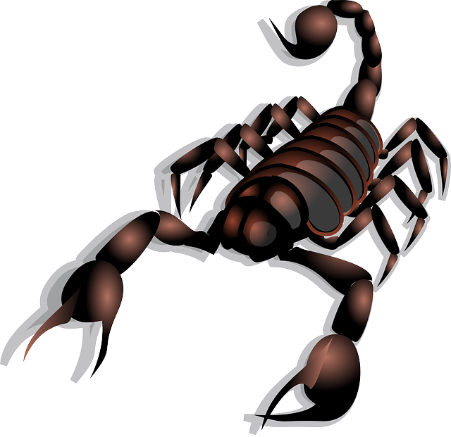 Scorpion, Poisonous, Stinger, Claws, Insect, Red, Brown