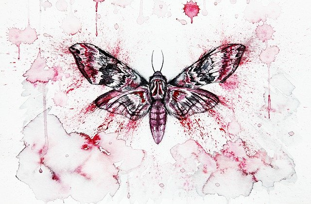 Red, Moth, Butterfly, Insect, Moths, Watercolor
