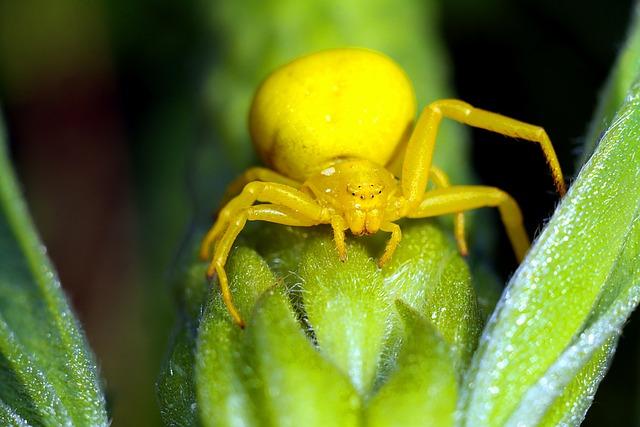Spider, Flowerbed, Insect, Macro, Arachnid, Nature