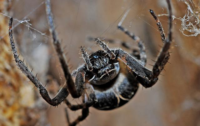 Spider, Arachnid, Macro, Insect, Nature, Animal