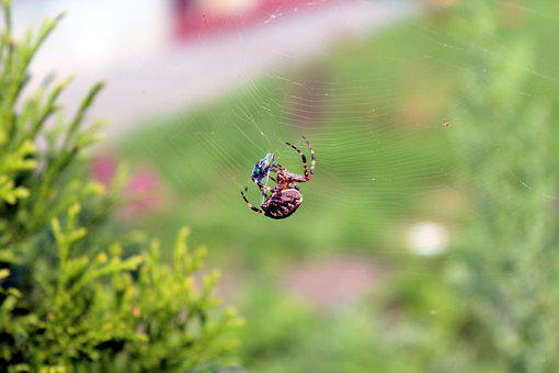 Spider, Cobweb, Nature, Insect, Network, Spider's Web