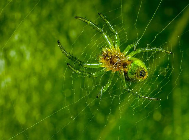 Spider, Insect, Spider Web, Nature