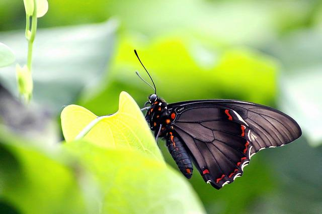 Butterfly, Nature, Insect, Leaf, Summer, Animal World