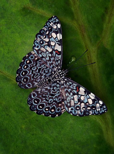 Butterfly, Insect, Nature, Tropical, Macro, Color