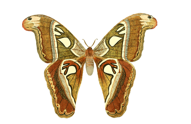 Butterfly, Animal, Insect, Isolated, Vintage