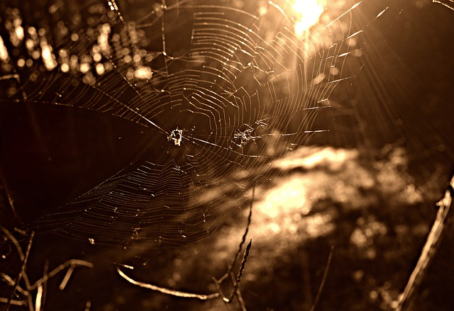 Spider Web, Spider, Insect, Web, Net, Pattern