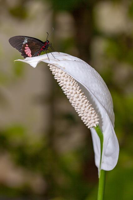 Nature, Outdoors, Insect, Wildlife, Flower, Butterfly