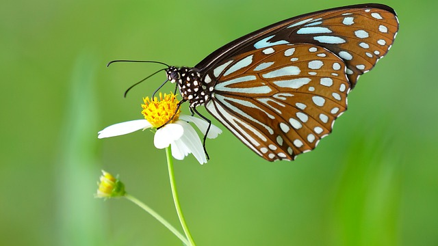 Butterfly, Nature, Insect, Wing, Summer
