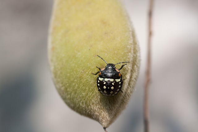 Bug, Leaf Bug, Insect, Insecta, Animal, Black, Macro