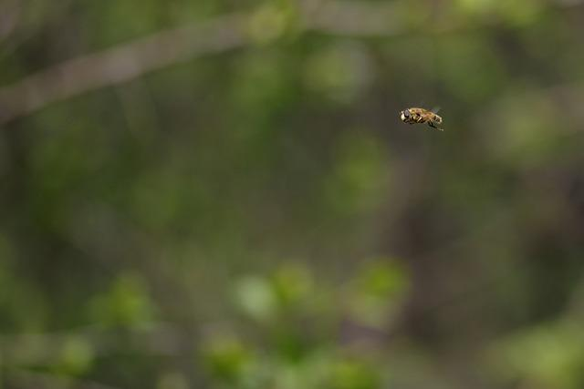 Bee, Insecta, Flight, Nature