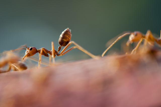 Ants, Close-up, Insects, Little, Tiny