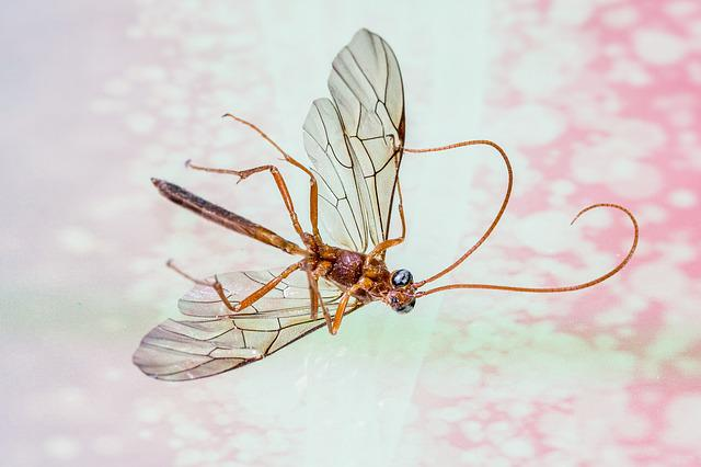 Schnake, Insect, Wing, Insects Die, Fly, Close, Nature