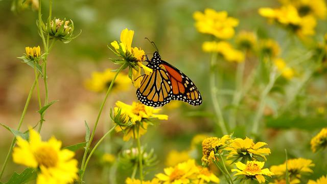 Flower, Butterfly, Yellow, Insects, Nature, Animals