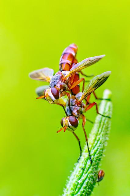 Fly, Insects, Pair, Nature, Mating, Sex, Green Nature